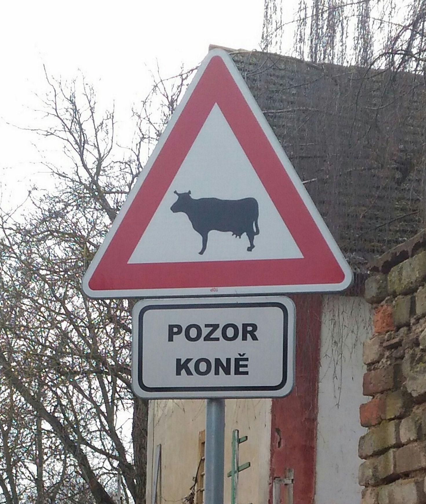 Dopravní značka pozor koně a krávy